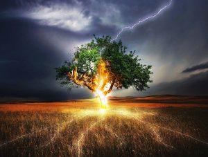 Un arbre sous la foudre